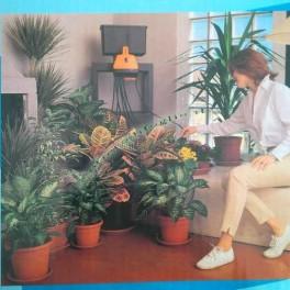 Irrigazione a Goccia Acquagenius per Innaffiare Piante da Appartamento